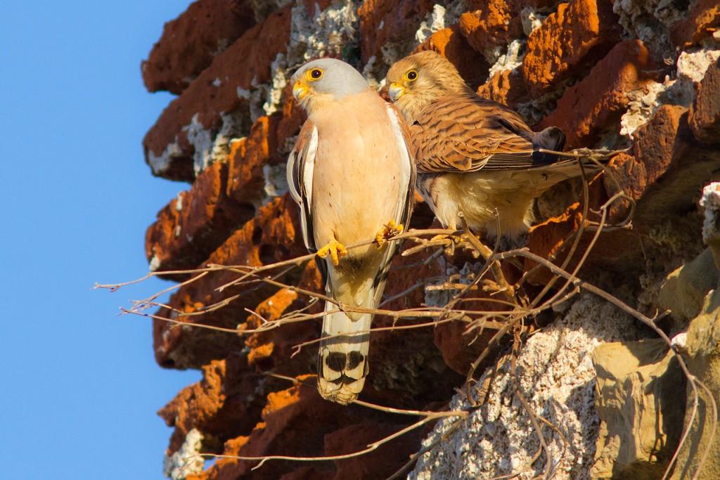 turismo-ornitologico-iniciacom-andalucialab
