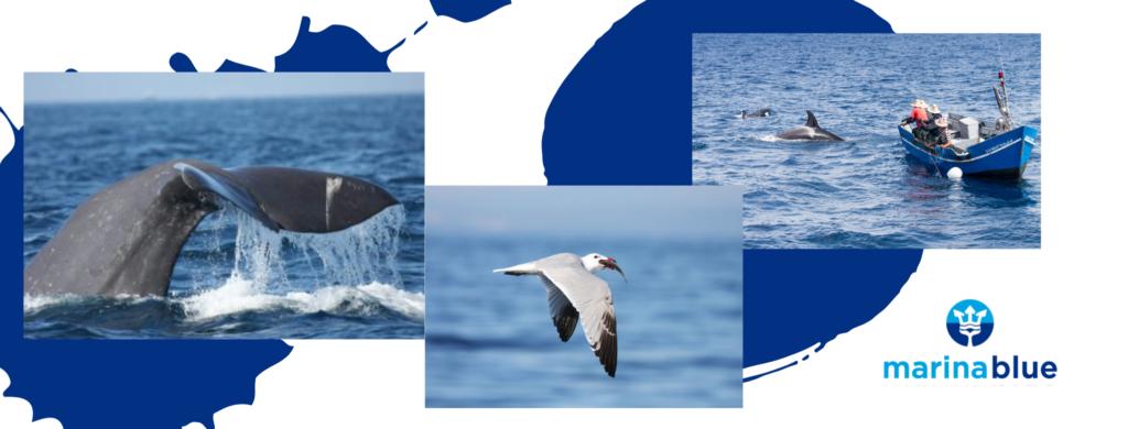 Turismo de mar avistamientos Marina Blue Tarifa