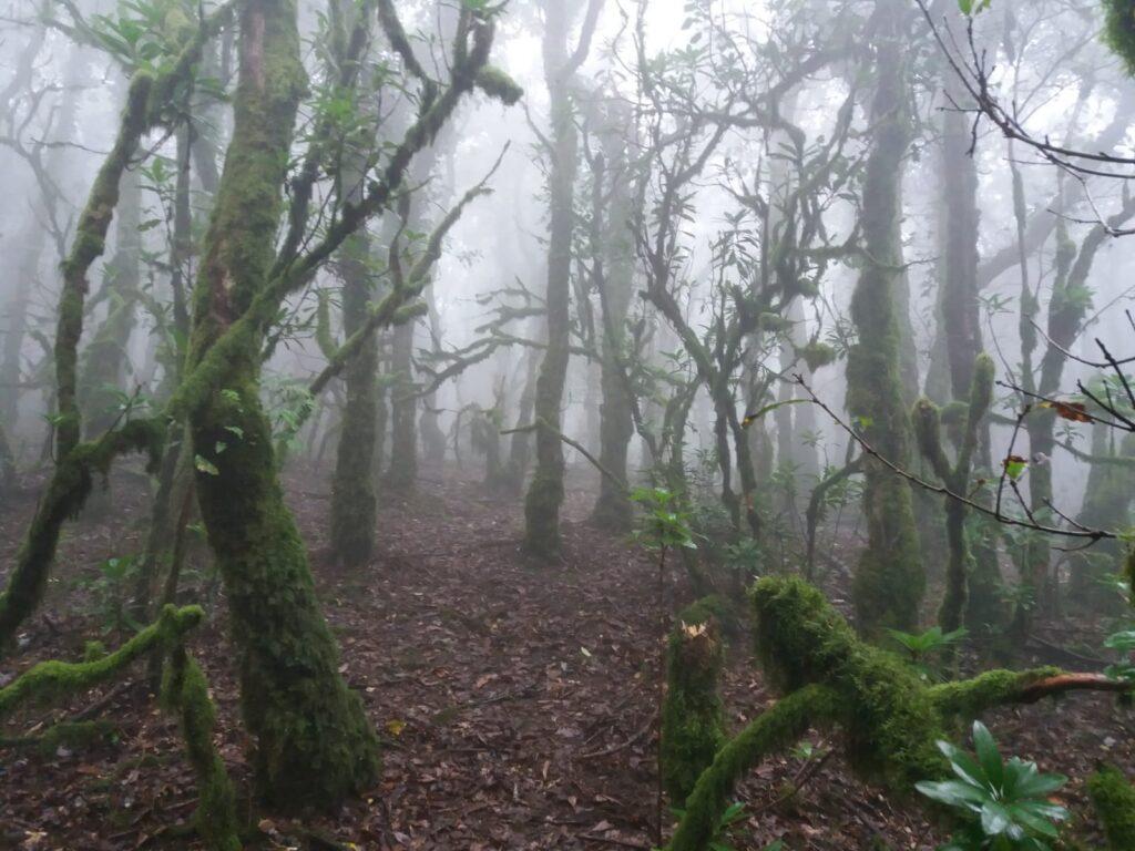bosque de niebla de algeciras