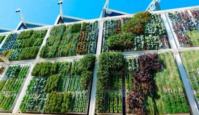 jardines-verticales-hoteles-hoteles-1024x609-1